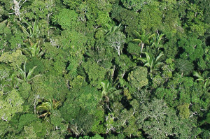 Floresta amazônica. Foto Margi Moss